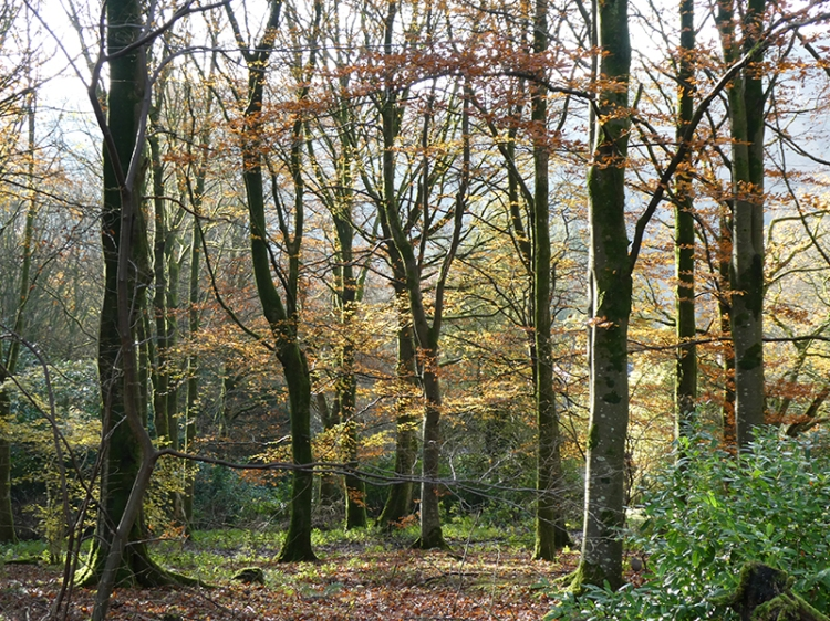 Holmhead wood
