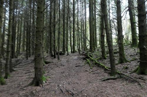kernigal wood 2