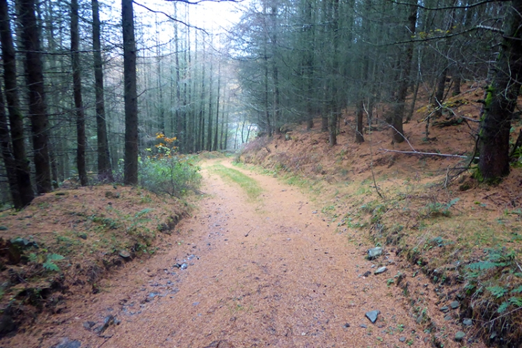 larcgh covered whitshiels track