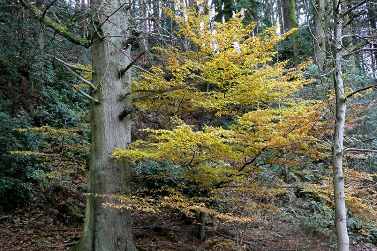 late autumn leaves lodge walks