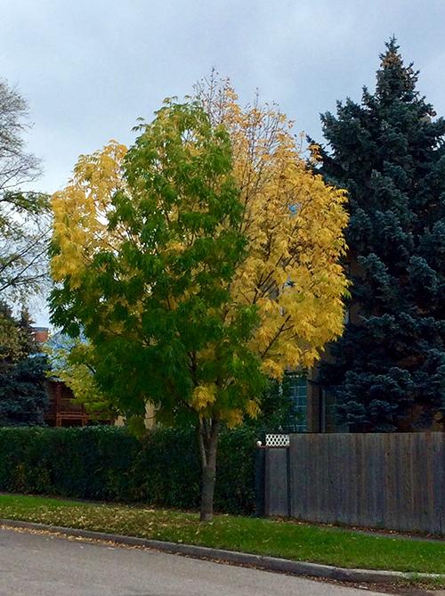 Mary Jo's tree