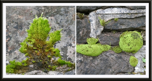 moss on A7 wall