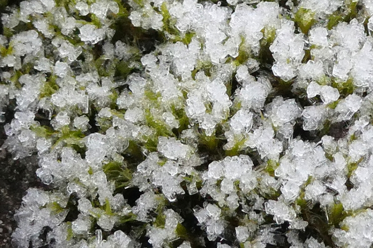 moss with ice