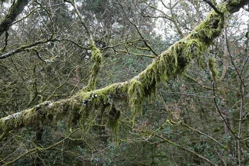mossy tree branch