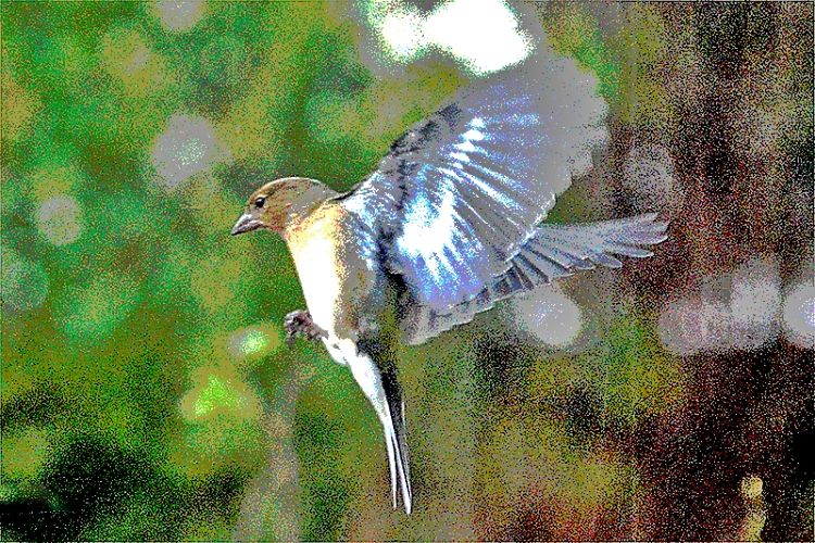 posterized chaffinch
