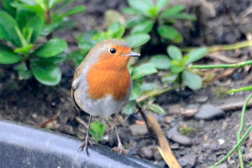 robin under new feeder