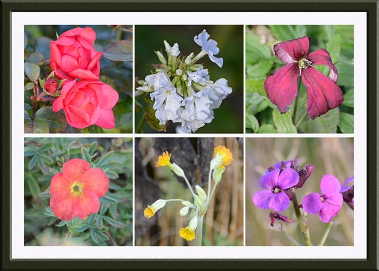 six november flowers