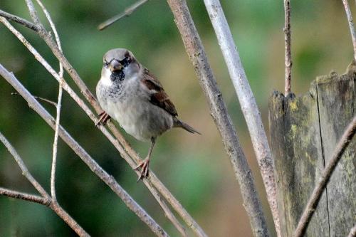 sparrow in bogus tree