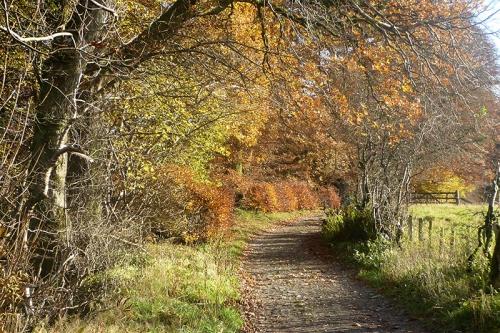 stubholm track november