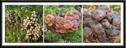 three fungi castleholm