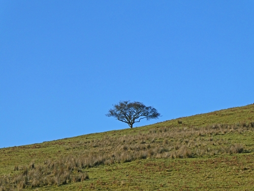tree above milnholm road