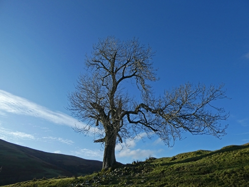 tree at breconwrae