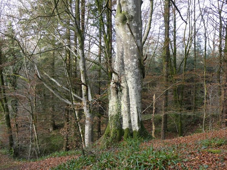 tree byreburn