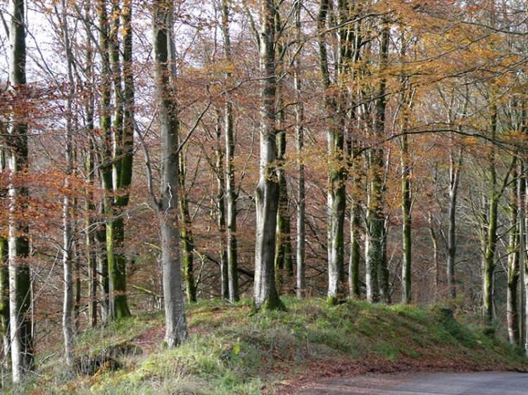 trees byreburn wood