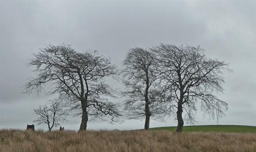 3 trees raehills