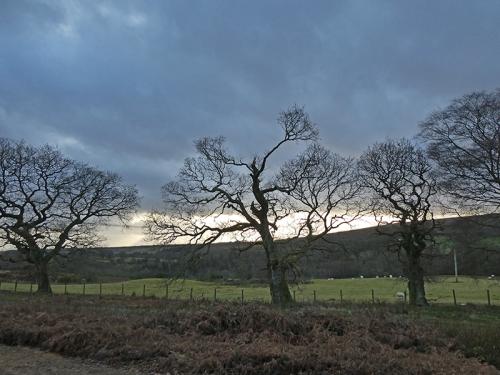 bare trees broomholm track