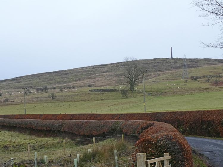 beech hedges Hillhead