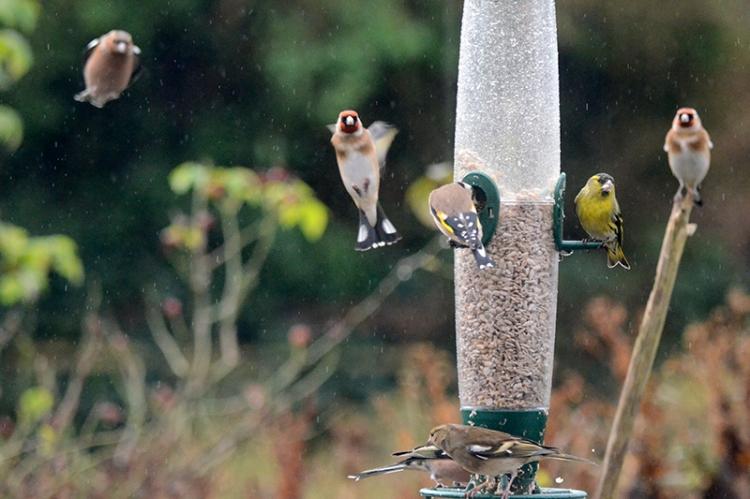 birds flying in