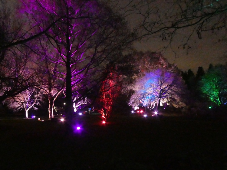 botanic lights 1