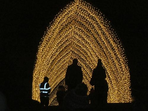 botanic lights 9