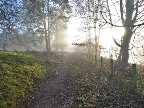 bruce's misty morning