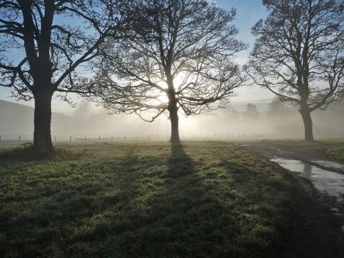 bruce's morning mist