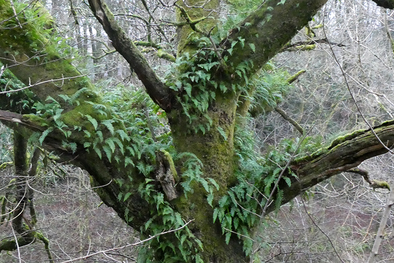 ferns on tree
