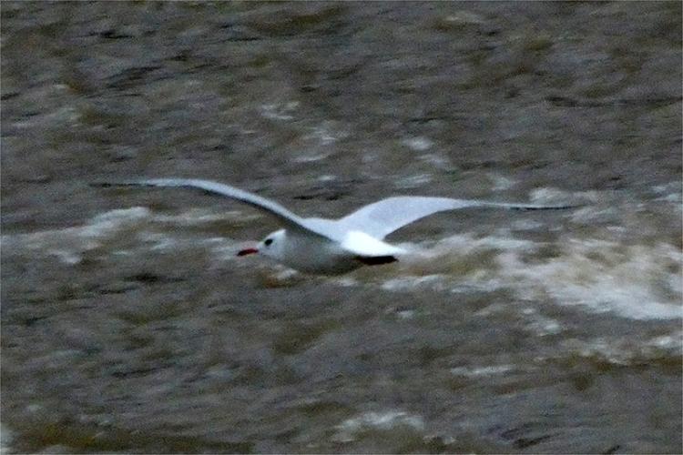 flying gull lumix 2