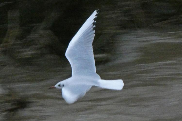 flying gull lumix 3