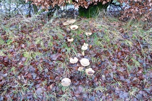 fungus at top of manse brae