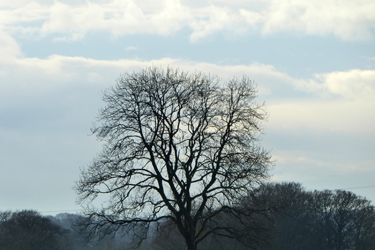 gair road tree
