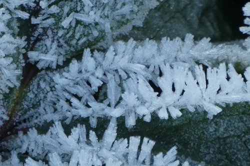 garden leaf ice
