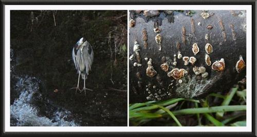 heron and fungus