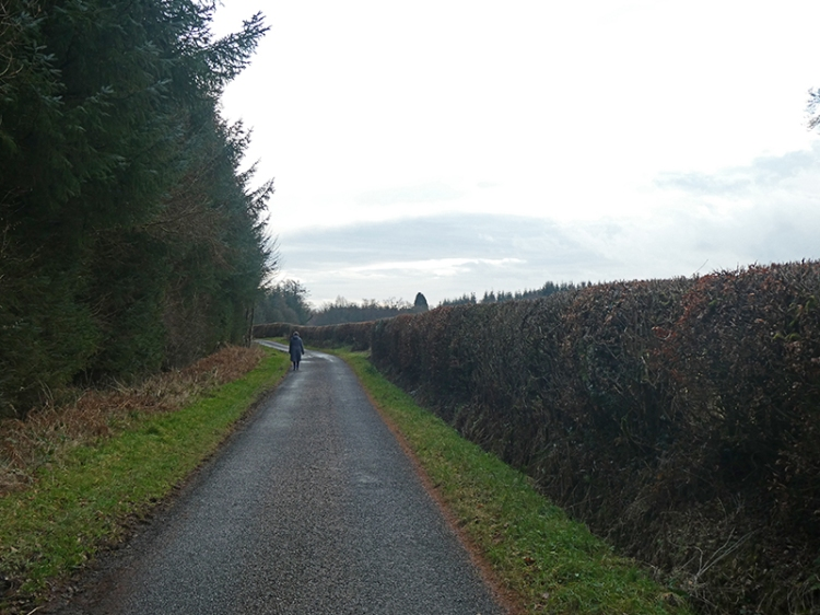 hollws road hedge