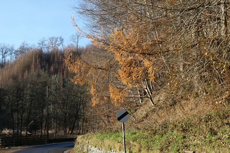last of the larches