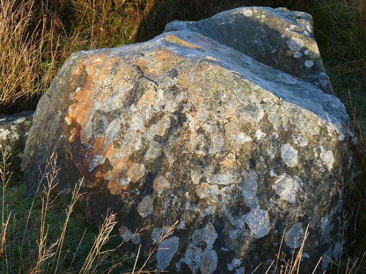 lichen at white yett