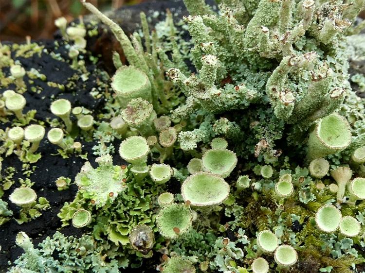 lichen fence post garden