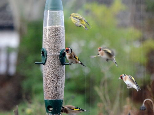 many flying birds