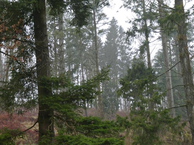 misty woods kernigal