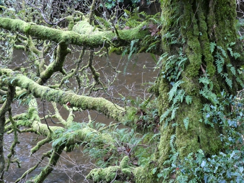 moss and fern tree