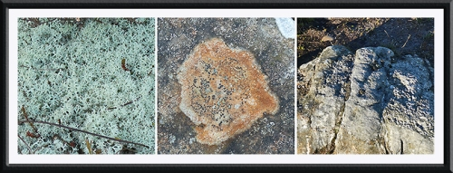 moss, lichen and rock Castle craigs