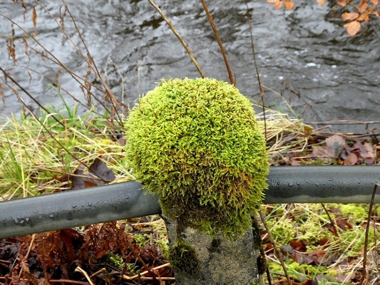 mossy fence post