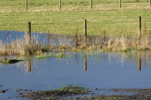 murtholm puddle with fence