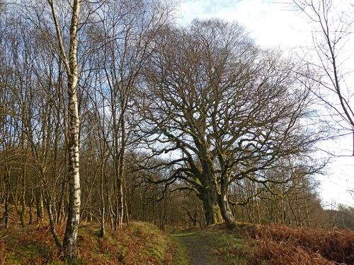 oak wood near jenny nobles