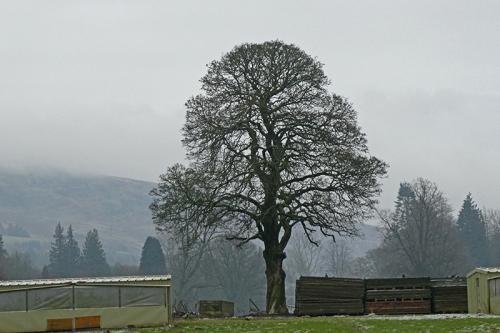 pheasant pen tree