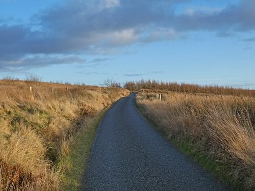 road to bird hide