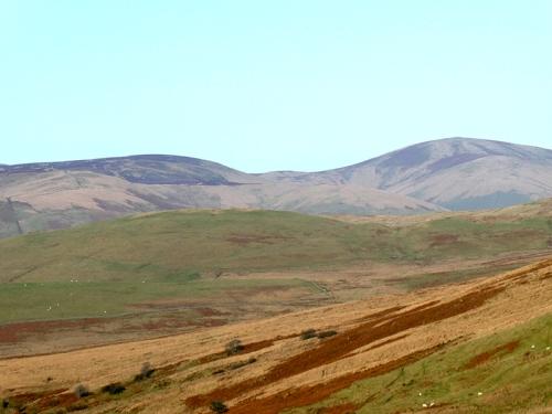 rolling hills ewes
