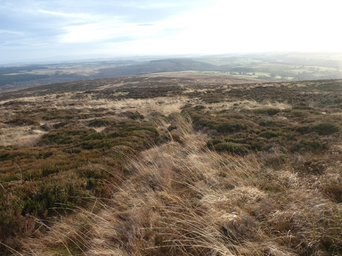 rough moorland whita