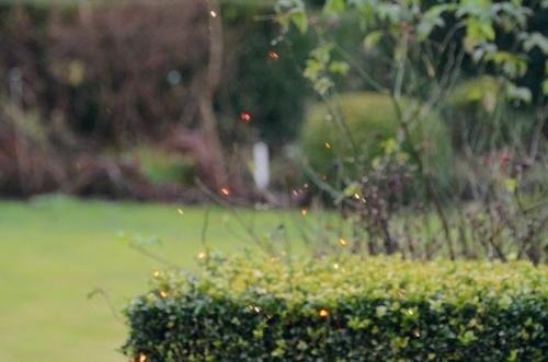 sparkle in the garden