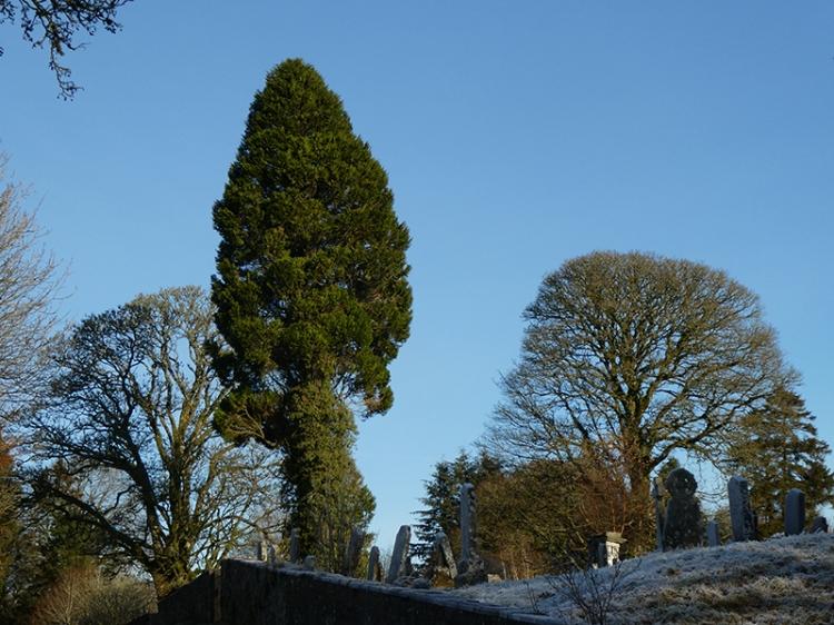 three trees wauchope